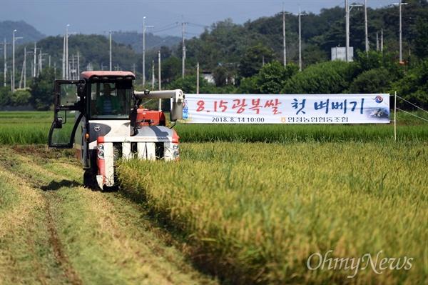 경북 영주시에서 올해 첫 햅쌀인 '815광복쌀'을 14일 수확했다.