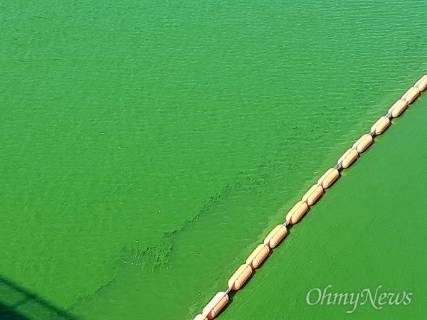 8월 15일 낙동강 본포취수장 부근의 녹조.