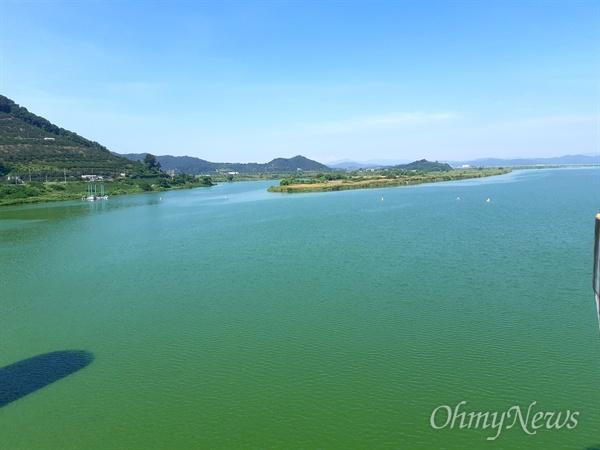 8월 15일 낙동강 창녕함안보 상류의 녹조.