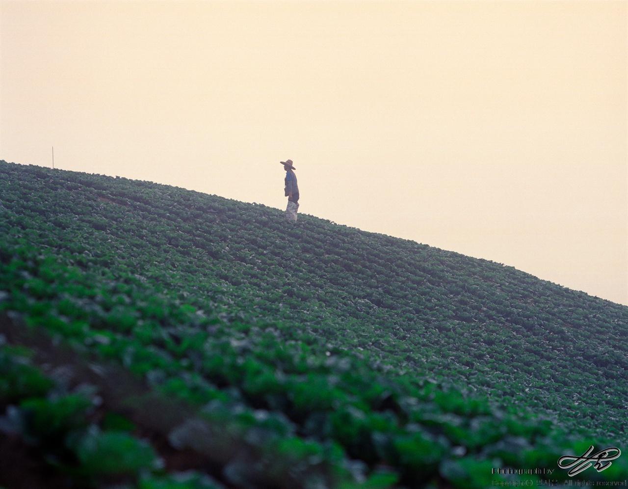 배추밭과 사람 (Pro400H)아침햇살이 직사광선으로 내리쬐기 직전 성실한 농부의 실루엣이 아름답다.