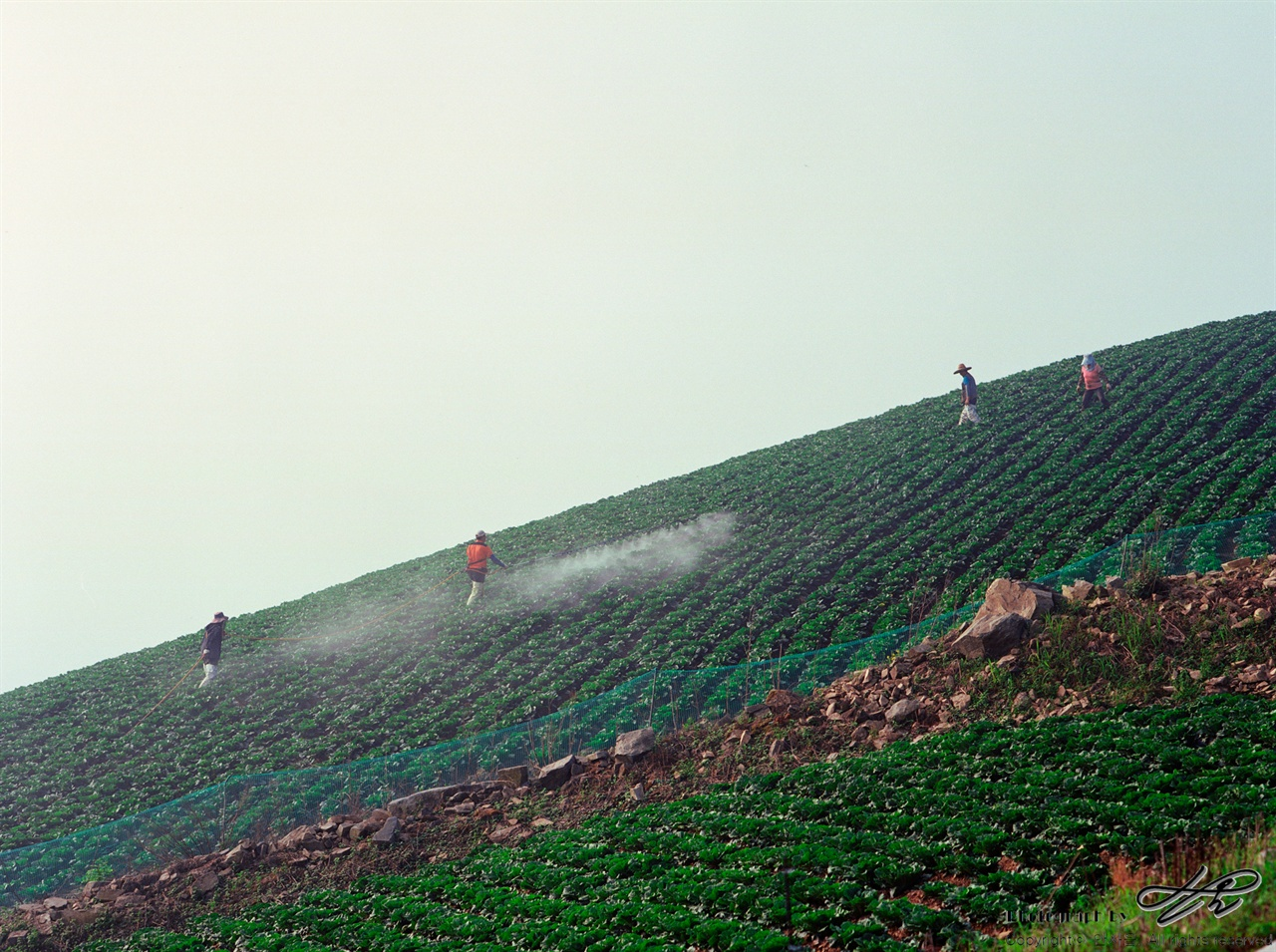 아침 작업 (Pro400H)여러 명의 일꾼들이 아침 작업을 하고 있다. 긴 호스로 하는 작업이라 팀워크가 필수.