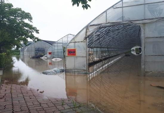 지난 6일 강원도 강릉시 저동 경포호 인근의 비닐하우스들이 폭우 여파로 물에 잠겨 있다.