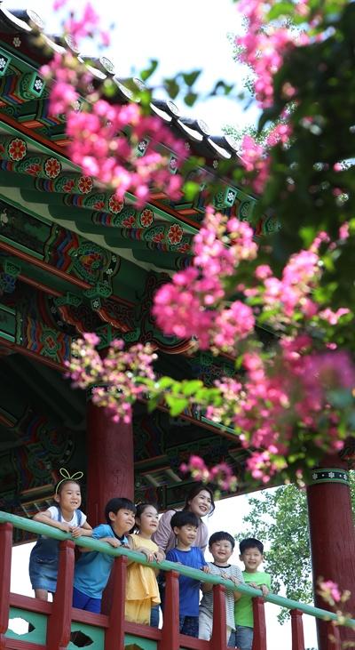 함양 학사루의 배롱나무.
