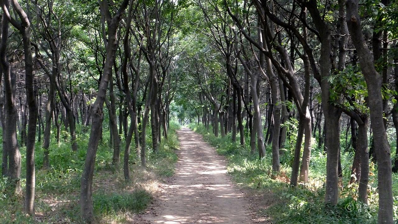 이채로운 이름을 지닌 도시 공원 숲 '중앙완충녹지'
