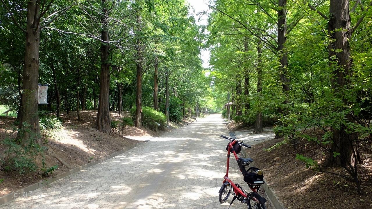 자전거 산책하기도 좋은 메타세쿼이아 나무 숲길.