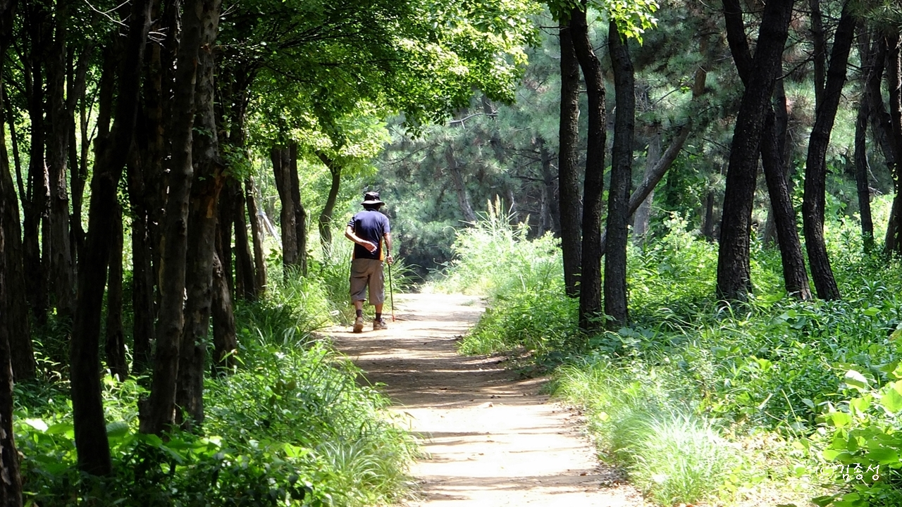 동네 주민들의 사랑을 받는 숲길.