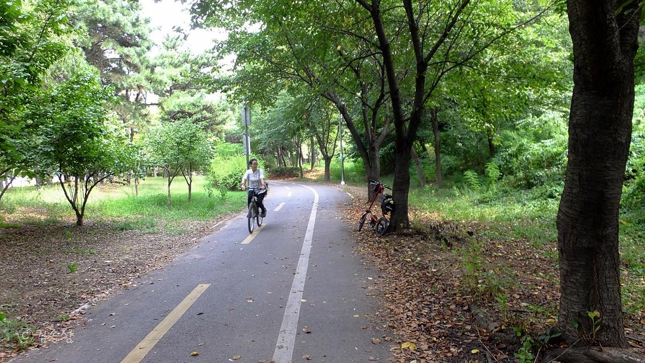 공운 숲속에 나있는 자전거 도로.