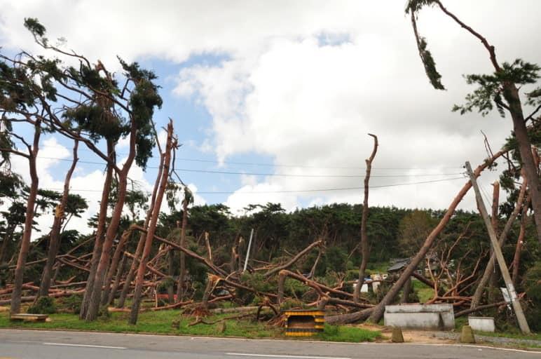 지난 2010년 9월 서산을 휩쓸고간 태풍 '곤파스'에 의해 나무들이 부러지는등 서산전역에서 큰 피해를 입었다.