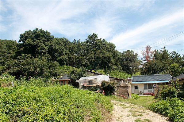 경주 장산 토우총이 있는 서악동 장뫼마을 모습