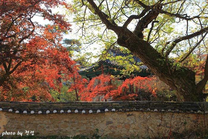 청암정 정원 충재 권벌이 1526년에 집 서쪽에 조성한 사대부가의 별당 정원이다.