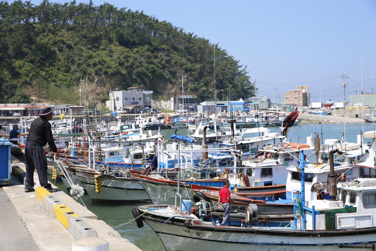 태풍 북상에 분주한 어민들 태풍 솔릭 북상 소식에 모항항 어민들이 분주한 손길을 옮기고 있다. 한 어민이 어선을 항구에 정박시키고 있다.