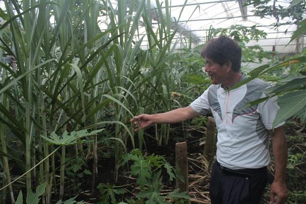 농업법인 유진팜의 꿈은 아열대농업을 6차산업과 연결시키는 것이다. 사탕수수밭의 김종태 씨