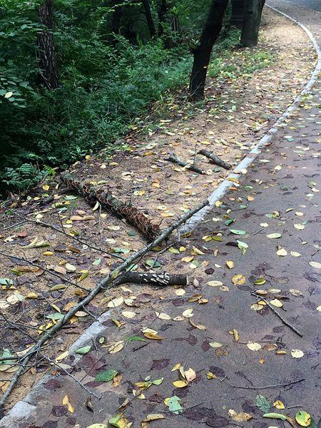태풍 솔릭으로 인하여 일부 나뭇가지들이 떨어져 있는 모습