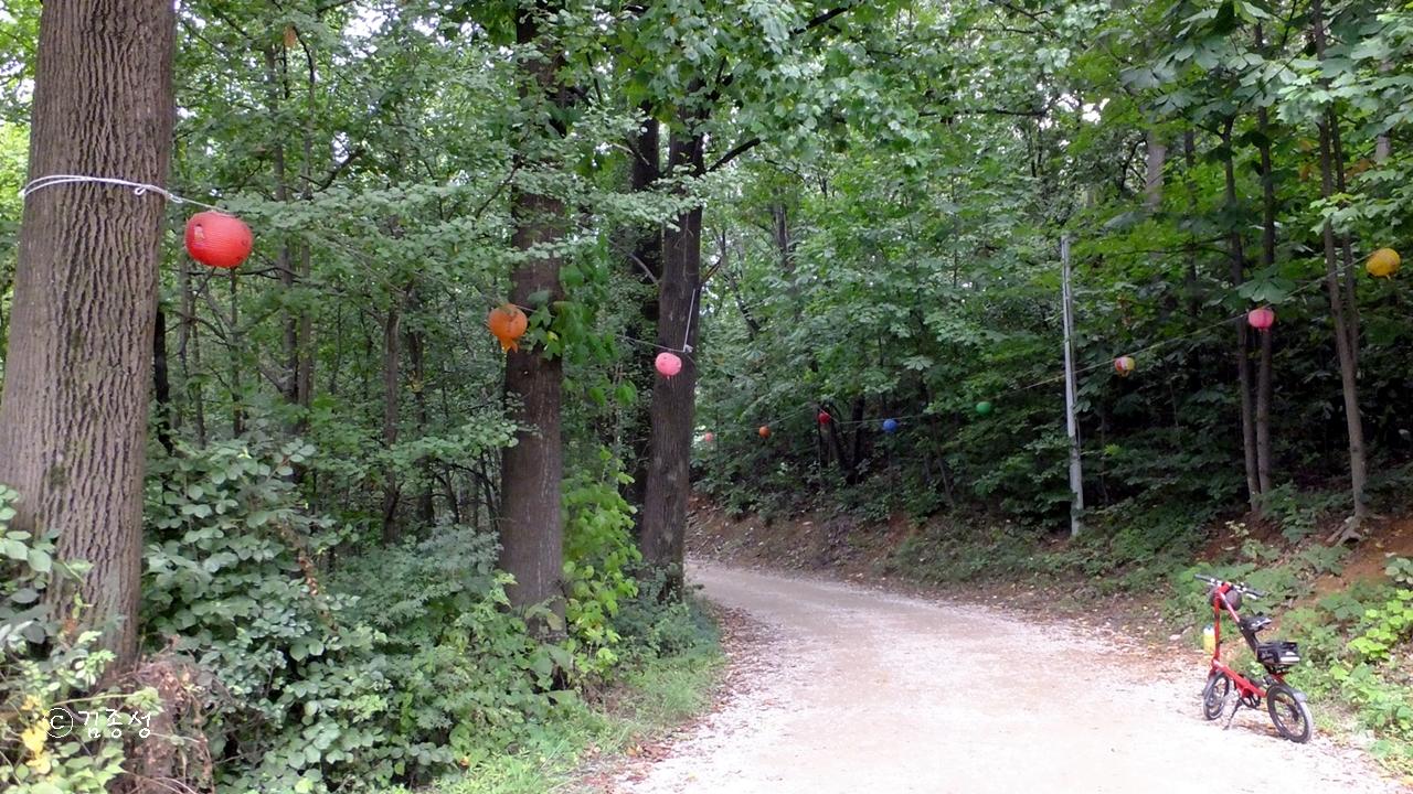 진덕사 가는 울울창창한 숲길.