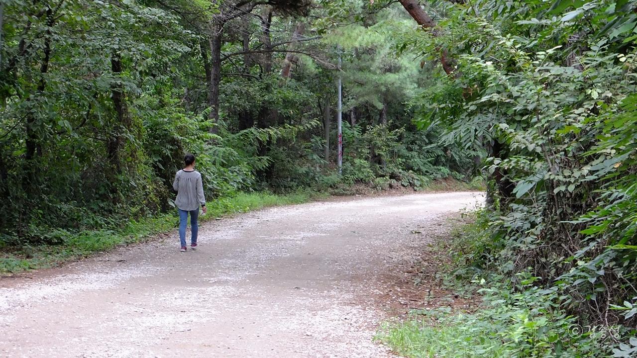 진덕사 가는 걷기 좋은 숲길.