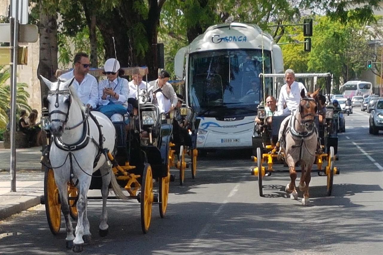 마차투어로 편안하게 즐기는 세비야 거리 관광.