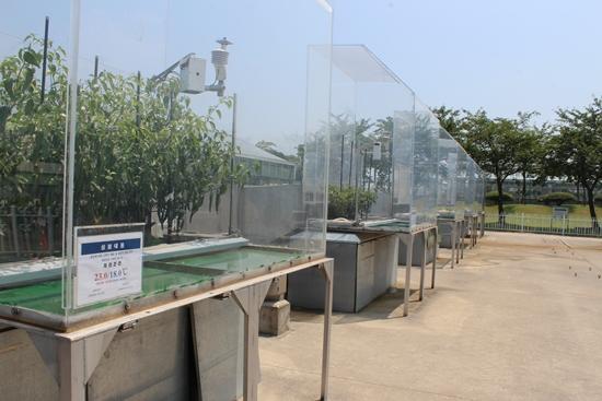 ▲ 온난화대응농업연구소가 지구온난화에 대비해 진행 중인 '온도에 따른 고추의 생육 및 광합성 반응 연구' 시설 모습.
