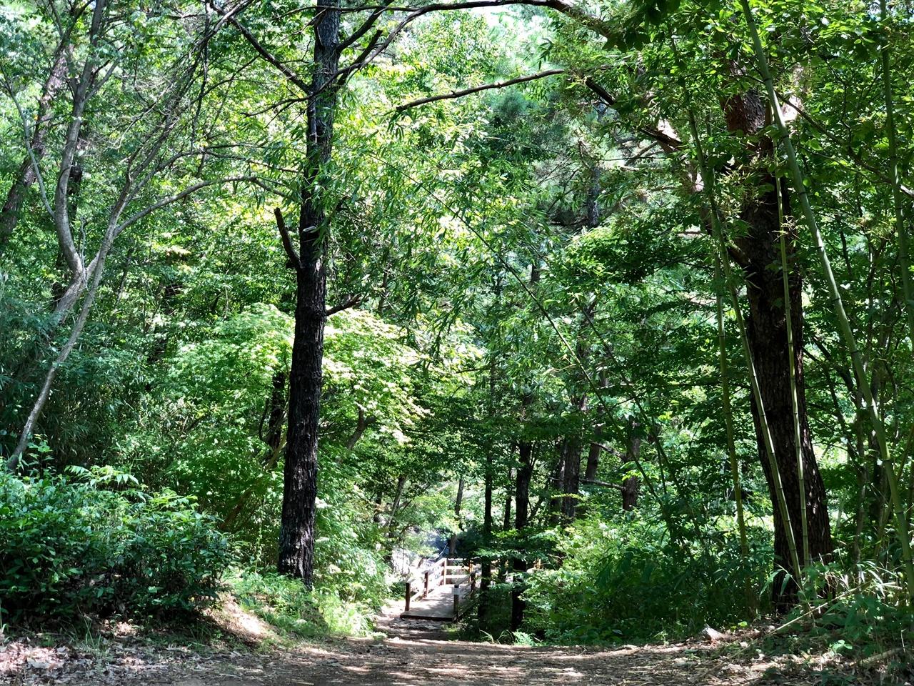 천은사 소나무 숲길