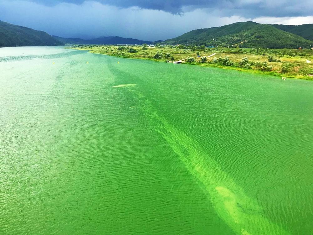 심각한 녹조 현상이 발발한 낙동강. 지난 8월 16일 낙동강 합천창녕보에서 본 낙동강.