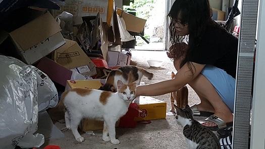 장은희 씨의 집 헛간. 지난 4월 충남 예산군 삽교읍의 한 한의원 앞에서 구조해온 치즈 고양이. 상당히 많이 자란 상태이다.