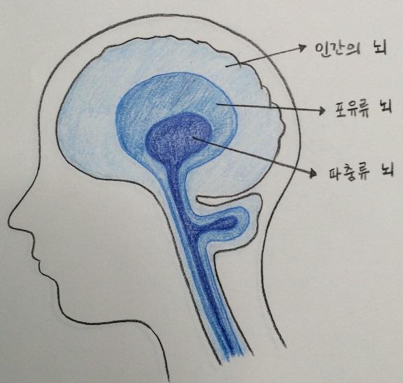 뇌의 3층 구조, 직접 그려봤습니다.