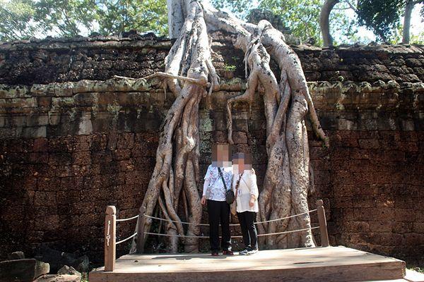 타프롬 사원 스펑나무 모습