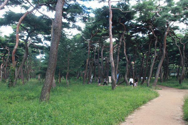 경주 황성공원 시민운동장 뒷편 산책로 모습