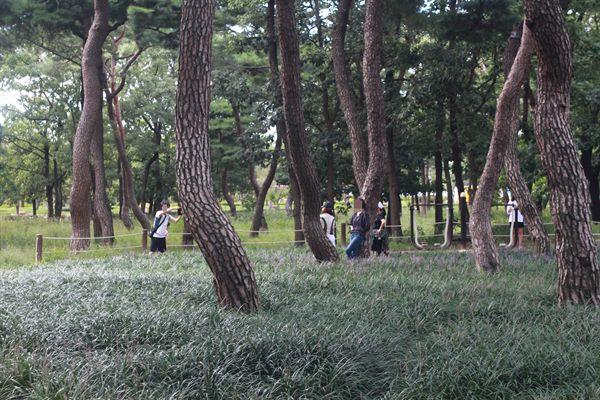 경주 황성공원 시민운동장 뒷편 맥문동 군락지에서 일반시민들이 사진 찍는 모습