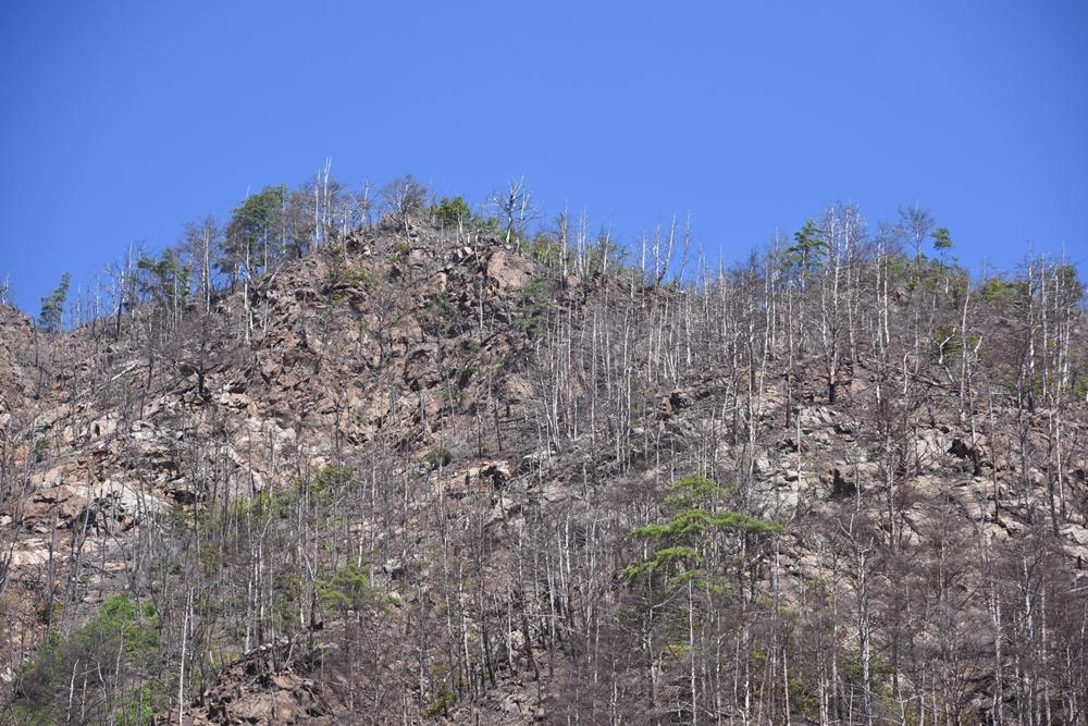 영풍제련소 뒷산. 소나무들이 거의 보이지 않는다.