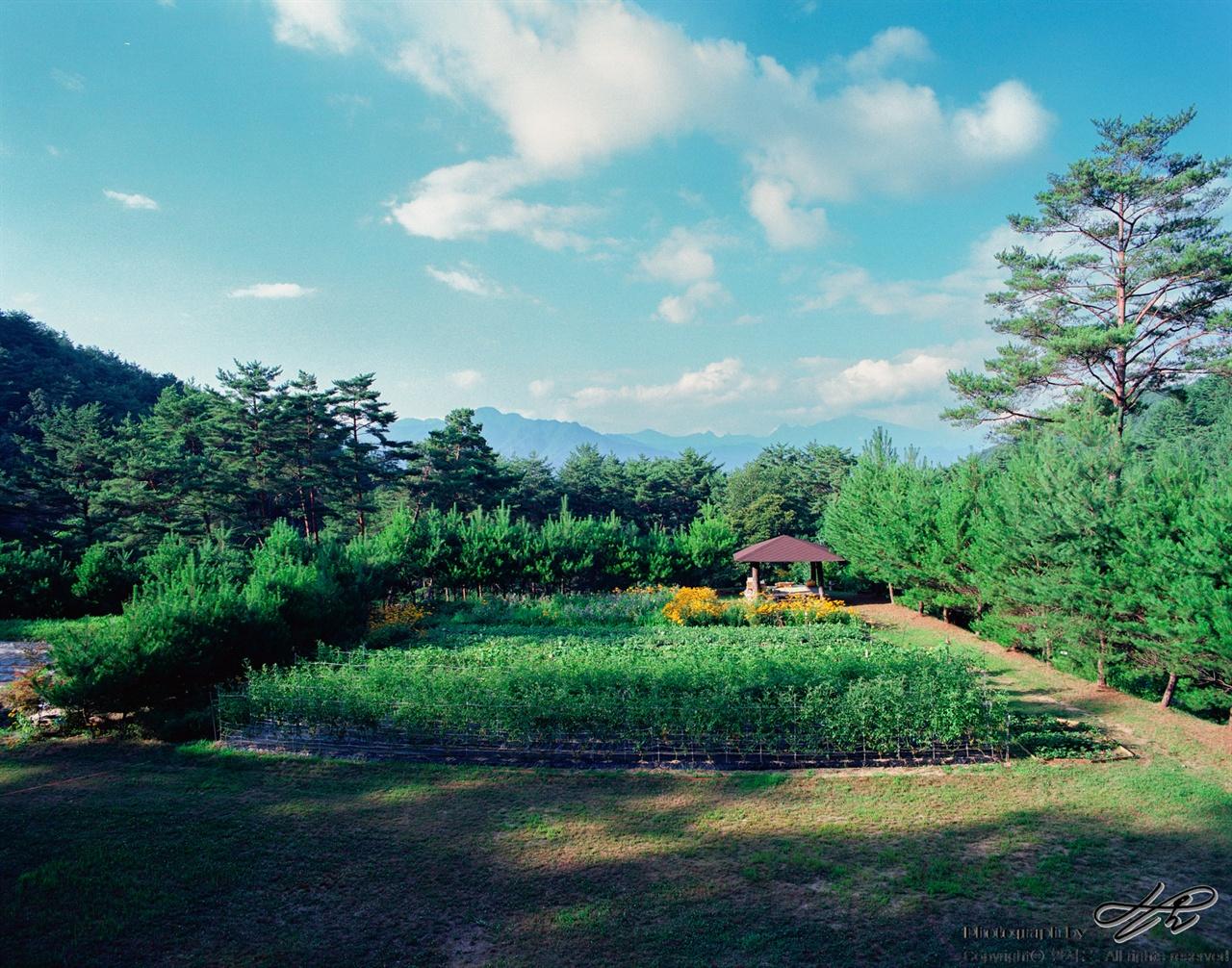 농장 내 가장 넓은 광장 (6*7중형/Pro400H)하늘내린터농원에서 가장 넓은 광장이자 수확체험장, 그리고 강론장이기도 한 곳. 멀리 보이는 능선은 설악산이다.