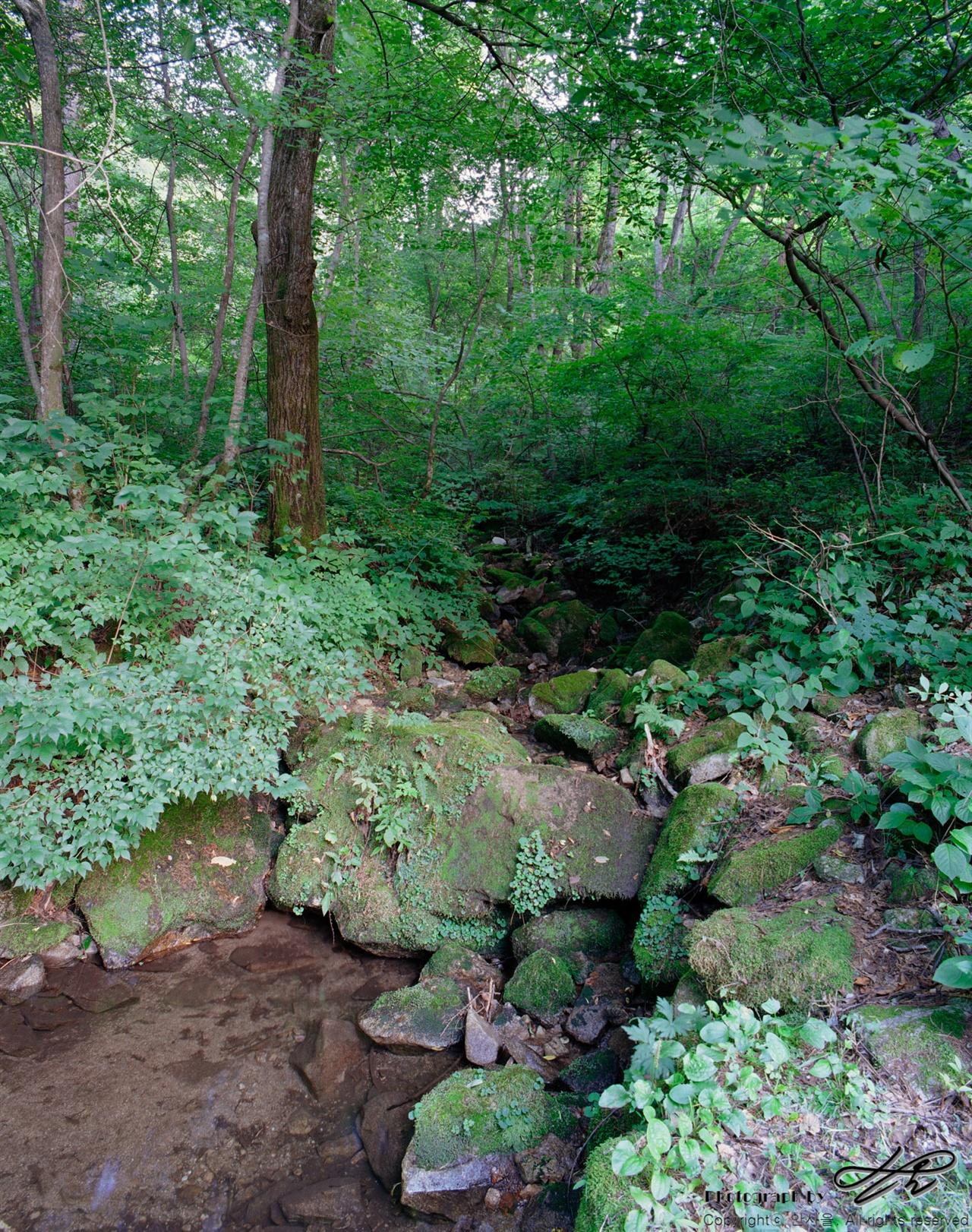 작은 계곡 (6*7중형/Pro400H)유래없는 여름 가뭄에도 이곳에서는 적은 양이라도 끊임없이 맑은 물이 흘러내리고 있었다.