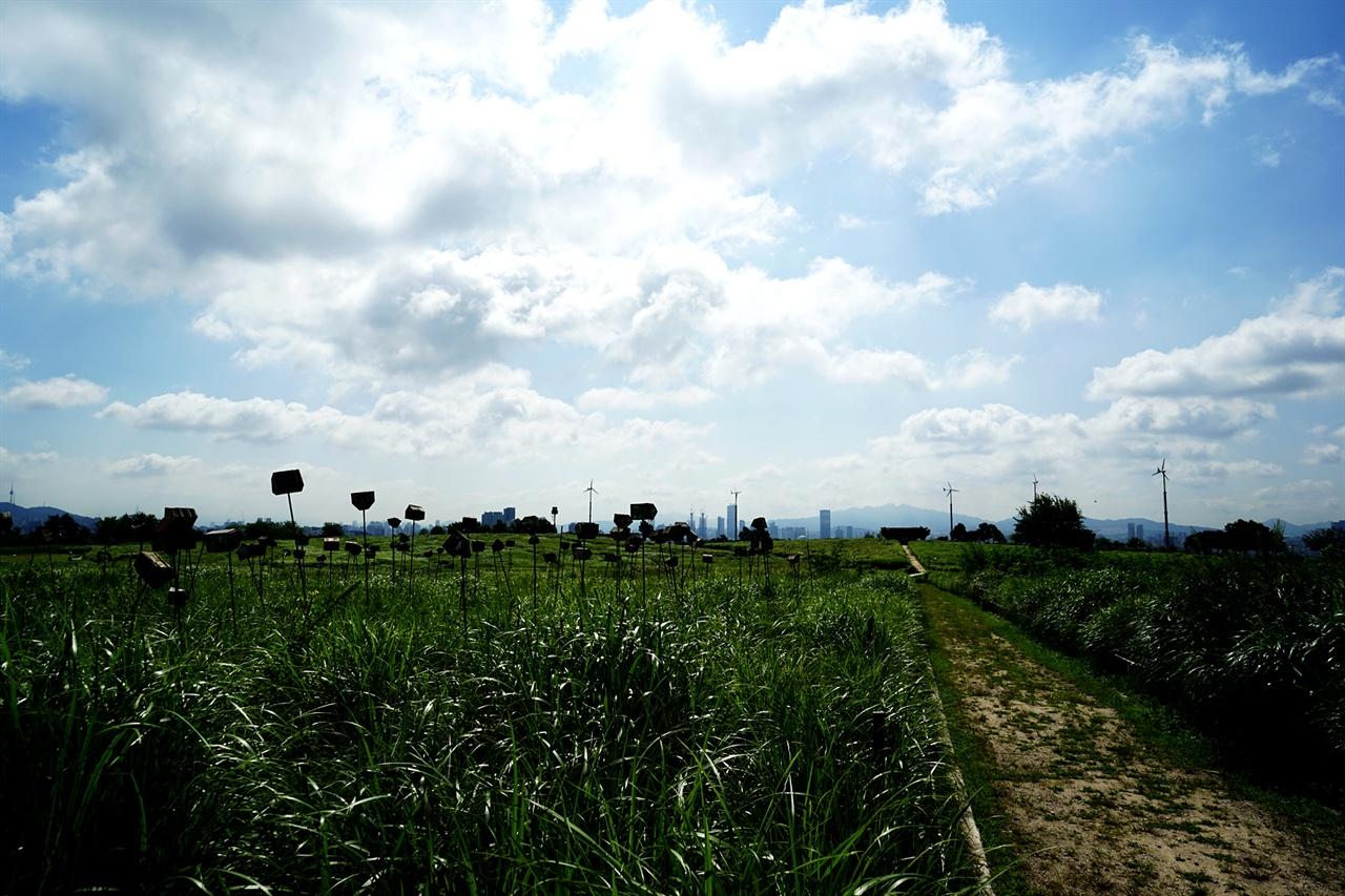 하늘공원의 억새밭
