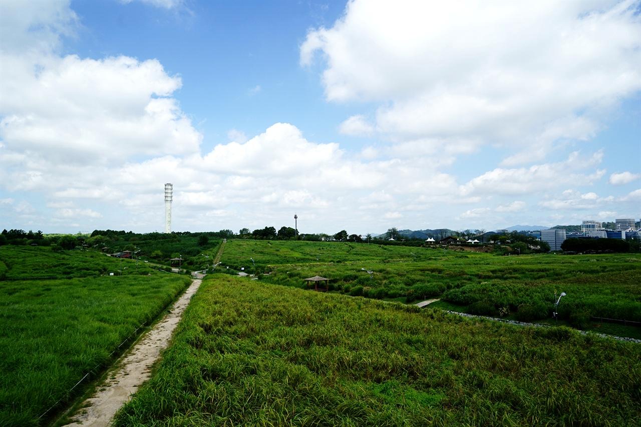 하늘공원의 억새밭 풍경