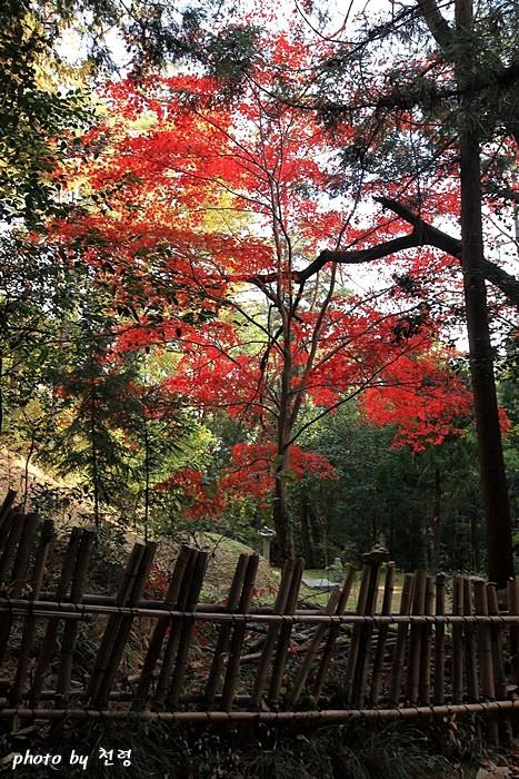 다산초당 가는 길 다산초당을 오르는 길가에 있는 윤단의 묘소 인근 단풍 풍경