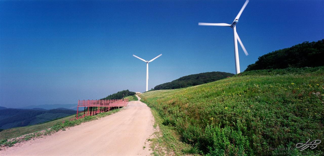 풍차와 야생화 (6*12중형/Portra400)원래 이곳은 풍력단지가 들어서기 전부터 야생화가 만발한 곳이었다. 평창군이 현재 야생화 단지로 개발하고 있다.