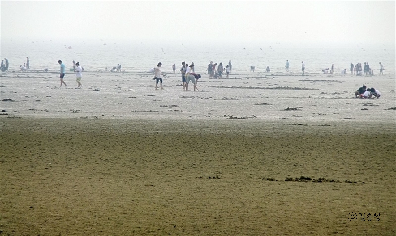 하루 두번 세계 5대 갯벌이 펼쳐지는 동막해수욕장.