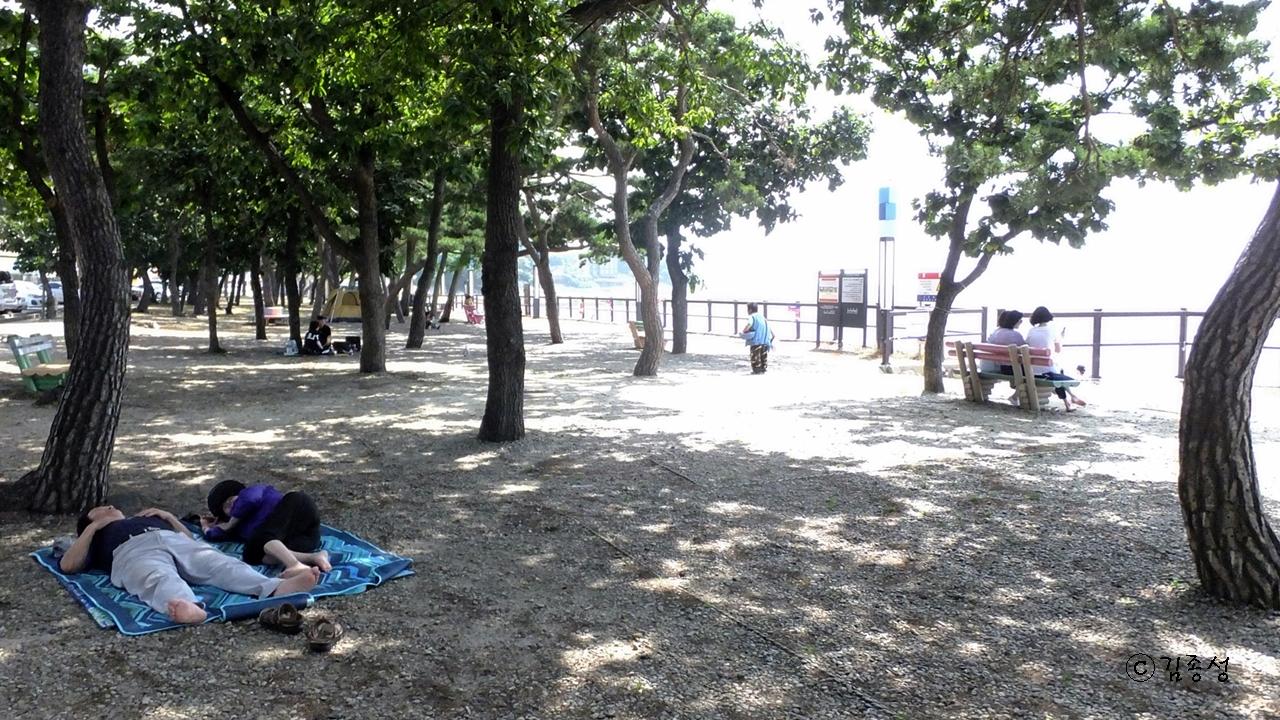 상쾌한 바람이 솔솔 불어오는 해변 솔숲.