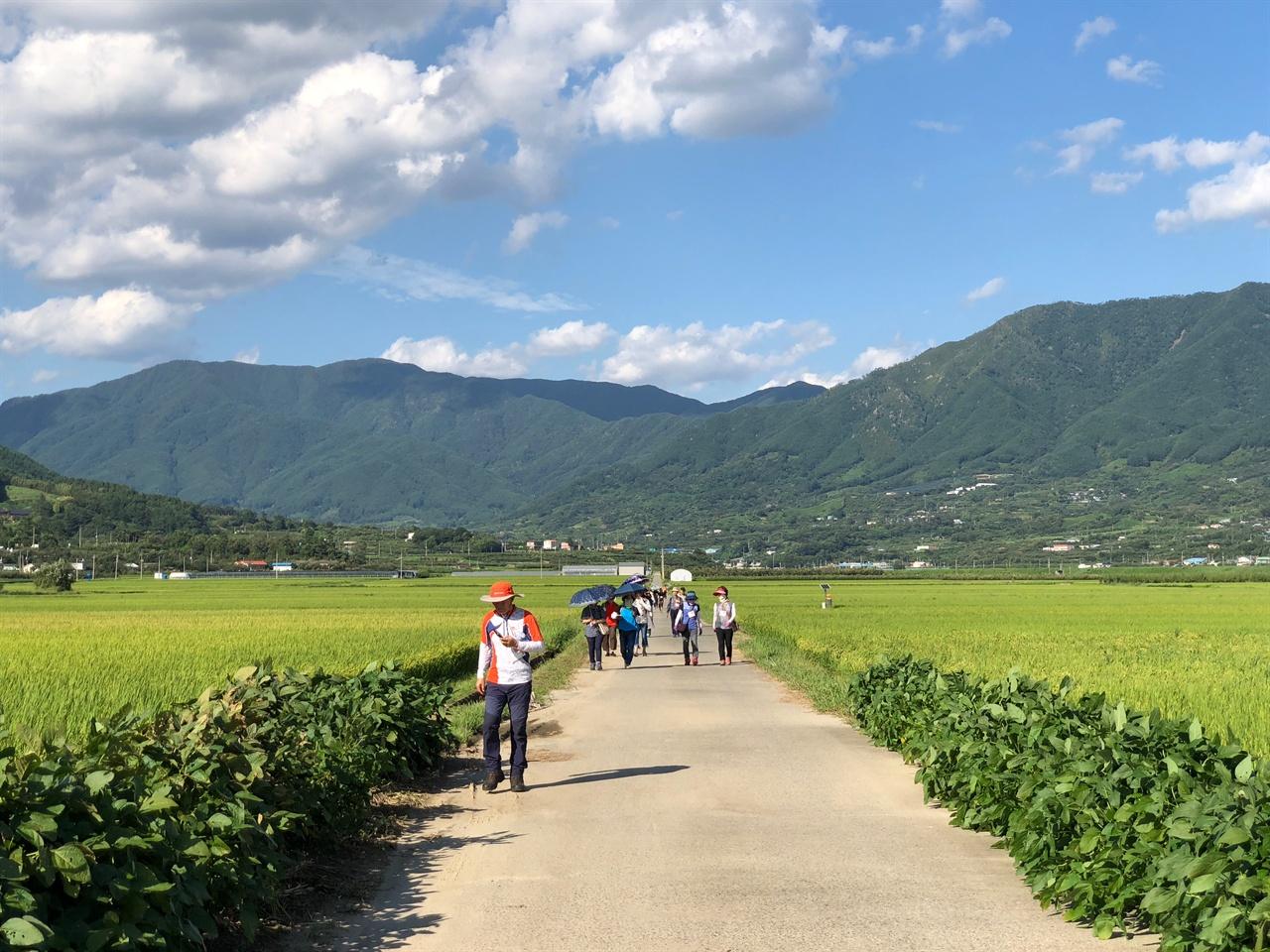 토지길 평사리들판을 가로지르는 토지길을 걷는 남도한바퀴 이용객들