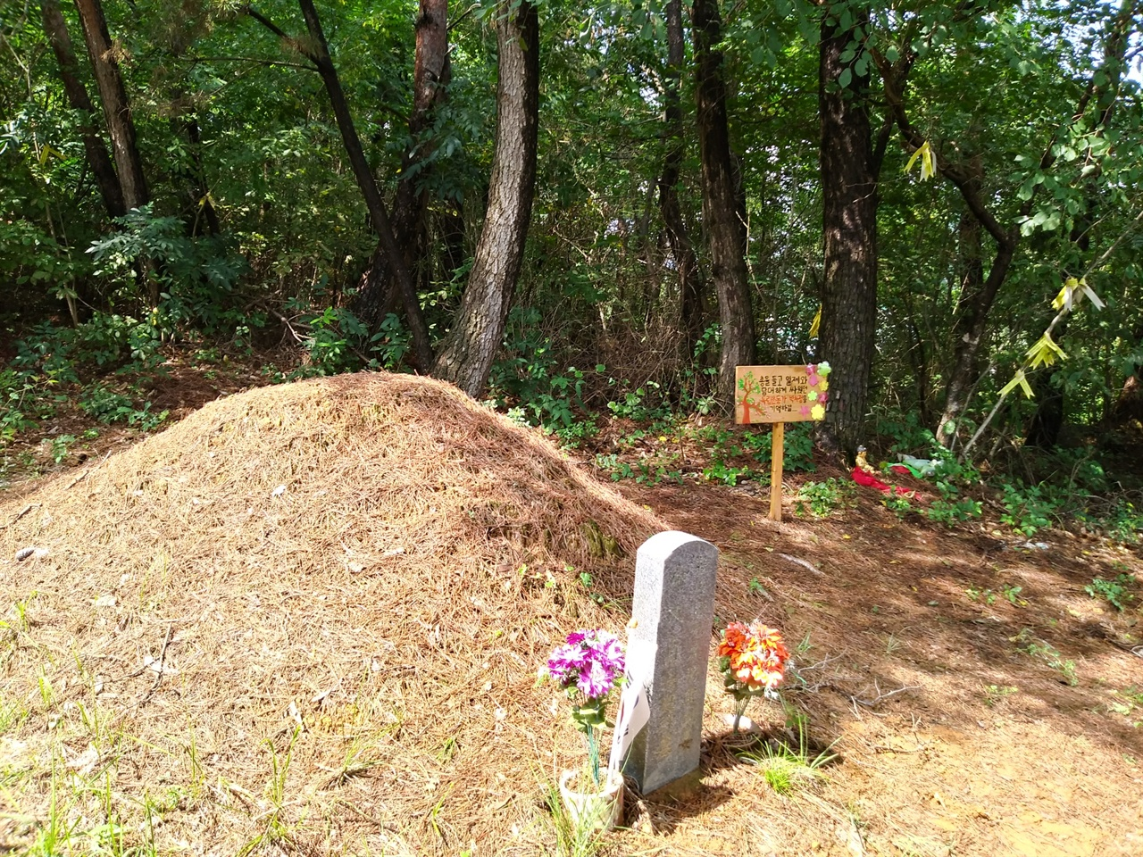 박차정 의사 묘의 모습 봉분 위에 떼가 자라지 않아 벌건 속살이 드러나 있다. 주위에 비슷한 크기의 묘가 많아, 빗돌만 아니라면 이곳이 의사의 묘라는 걸 알기 힘들다. 뒤편으로 아이들이 세워놓은 팻말이 보인다.