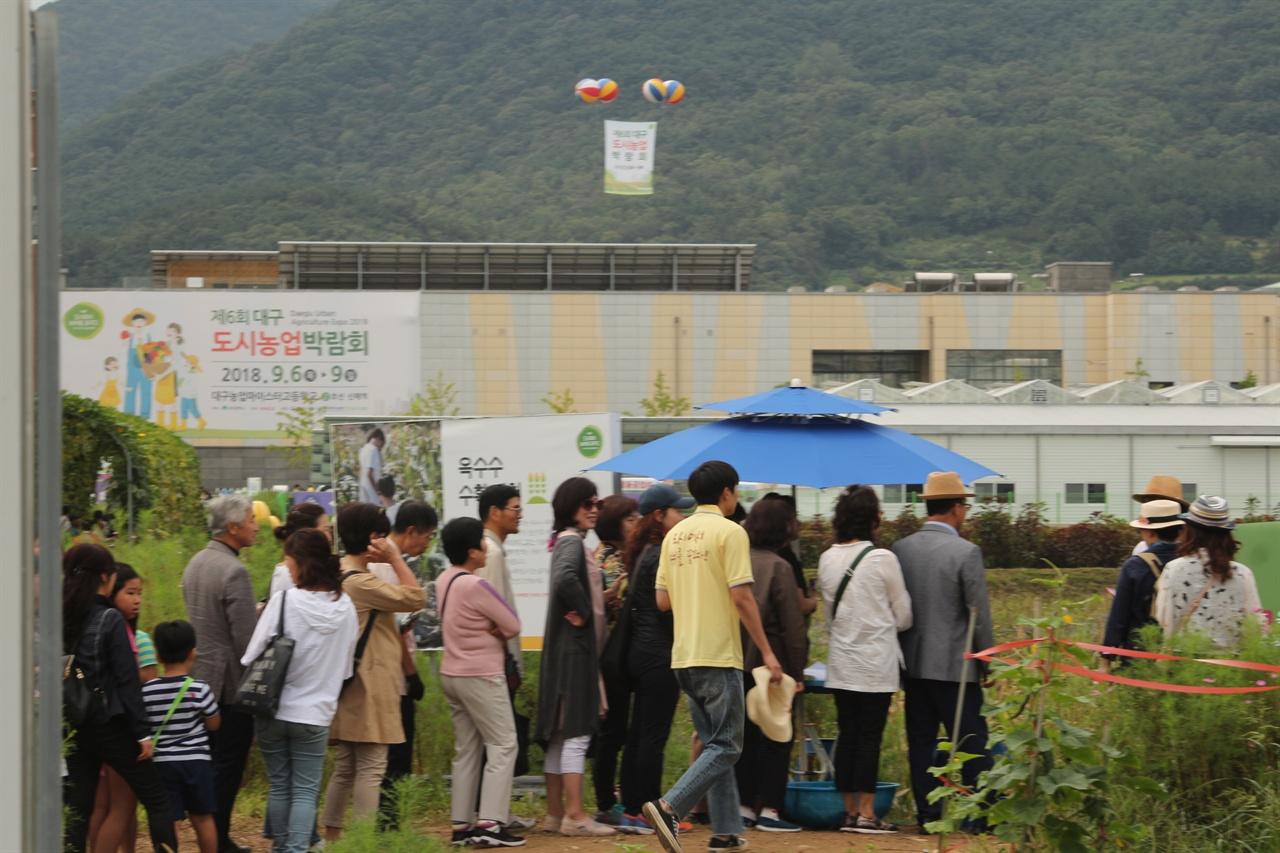 옥수수체험에 나서고 있는 시민들의 모습 대구도시농업박람회 현장에서 옥수수체험에 나서고 있는 광경.