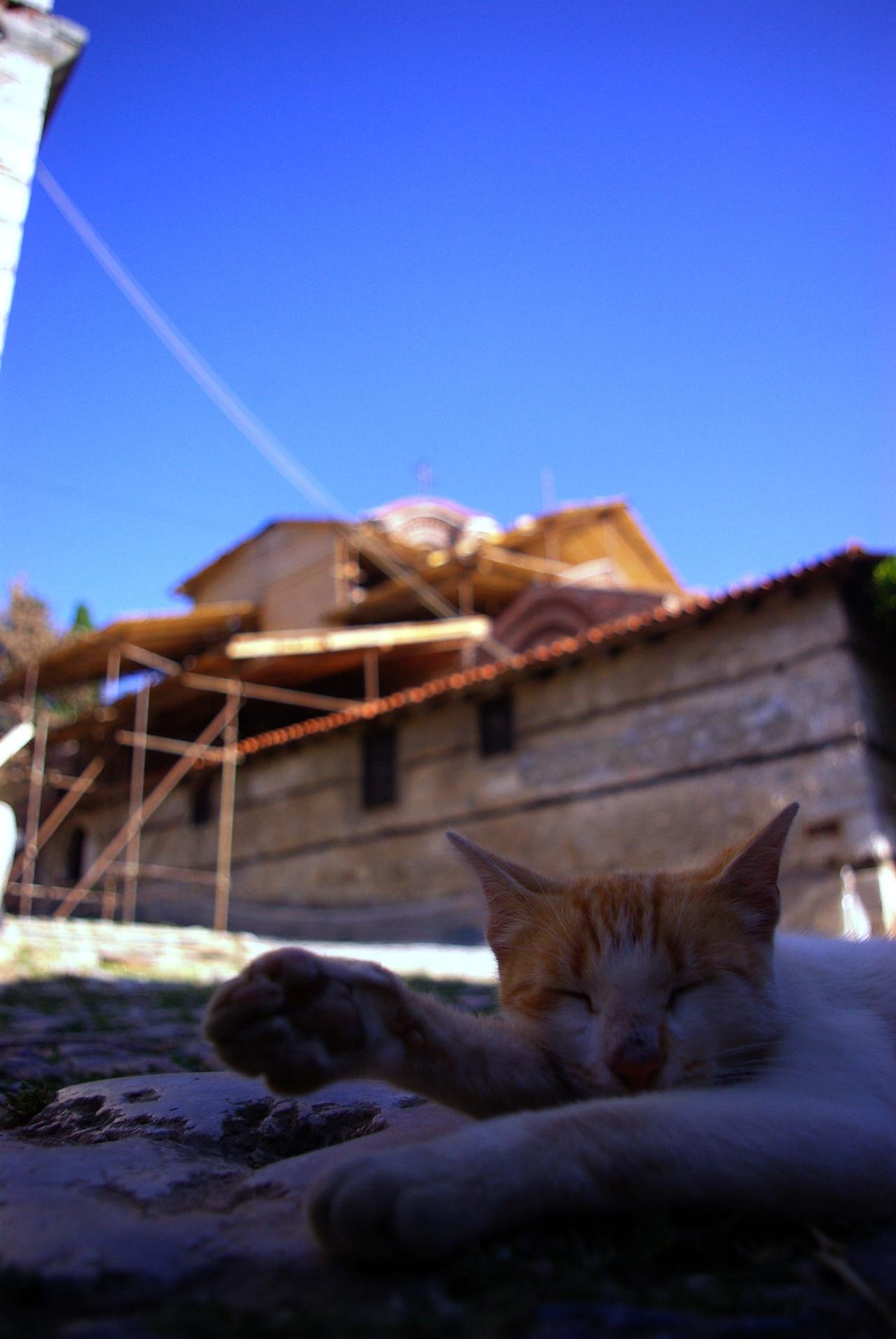 오흐리드에선 고양이도 평화로운 낮잠을 즐긴다.