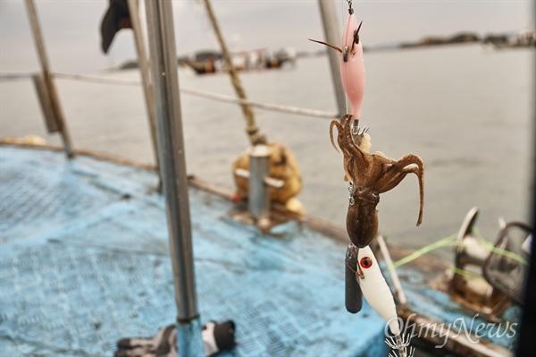 낙지와 주꾸미는 문어과의 사촌이다. 다리 모양을 보고서 이름을 정했는지 모르겠지만 주꾸미는 '물갈퀴발(Webfoot)', 낙지는 '긴다리 문어(Longfoot octopus)'다.