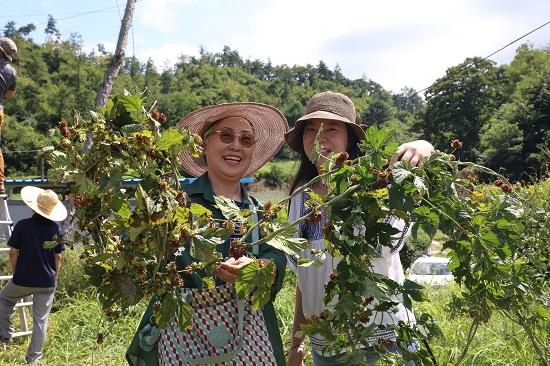 축제 참가자들이 수확한 홉 넝쿨을 든 채 웃고 있다.