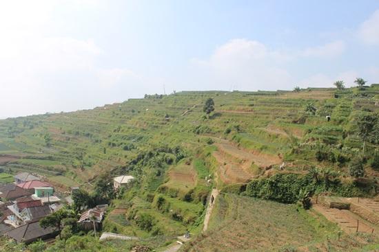 ▲ 인도네시아 팡고르산 중턱의 수까따야 마을. 해발 1400m의 고산지대로 국내 채소류와 유사한 작물이 많이 재배되고 있다. 새로운 작물 개발을 위해 아열대농업의 '고향'에 해당하는 아열대기후대 국가의 농업과 유전자원에 관심을 가져야 할 것으로 보인다.