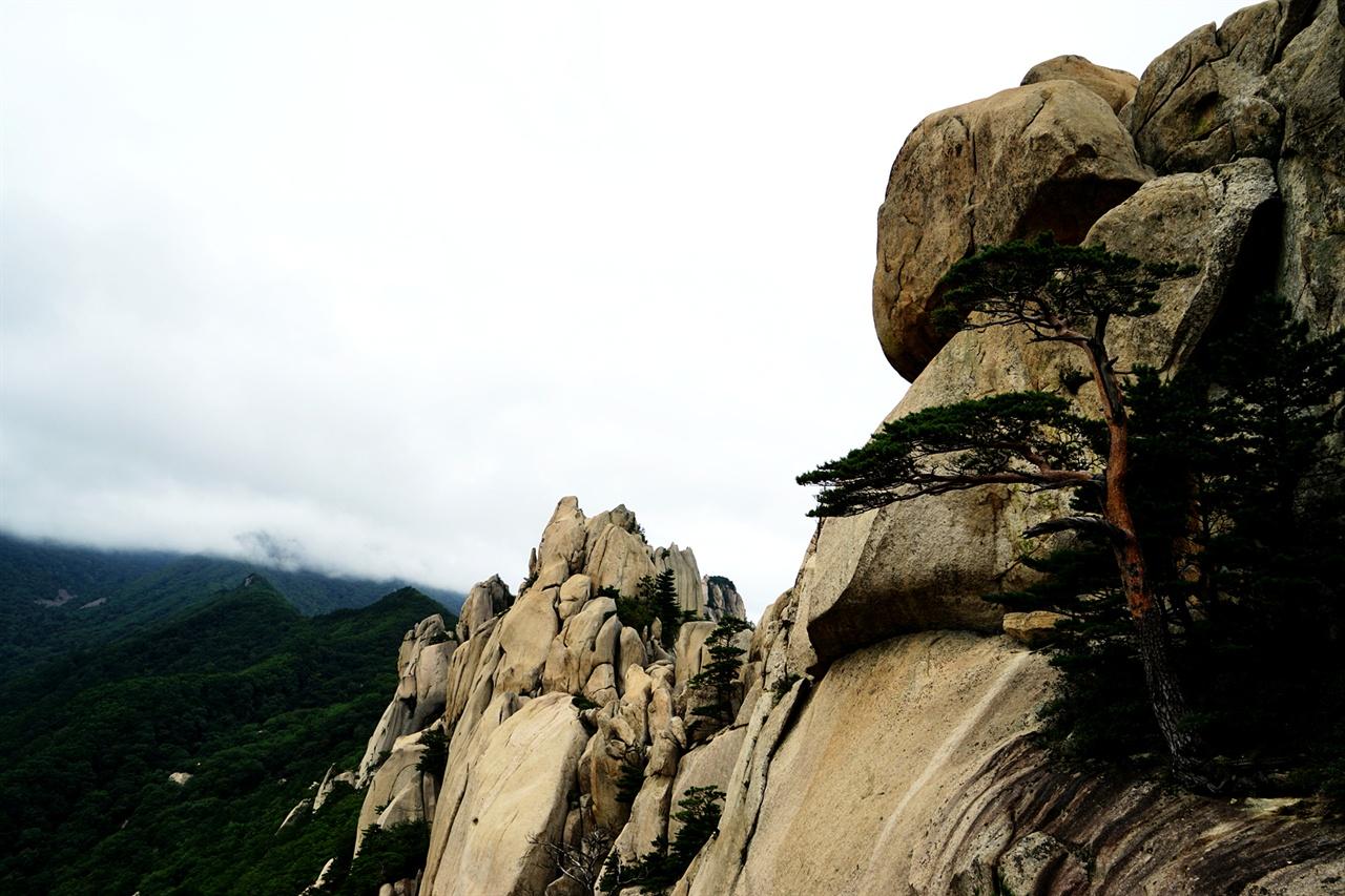 울산바위와 소나무