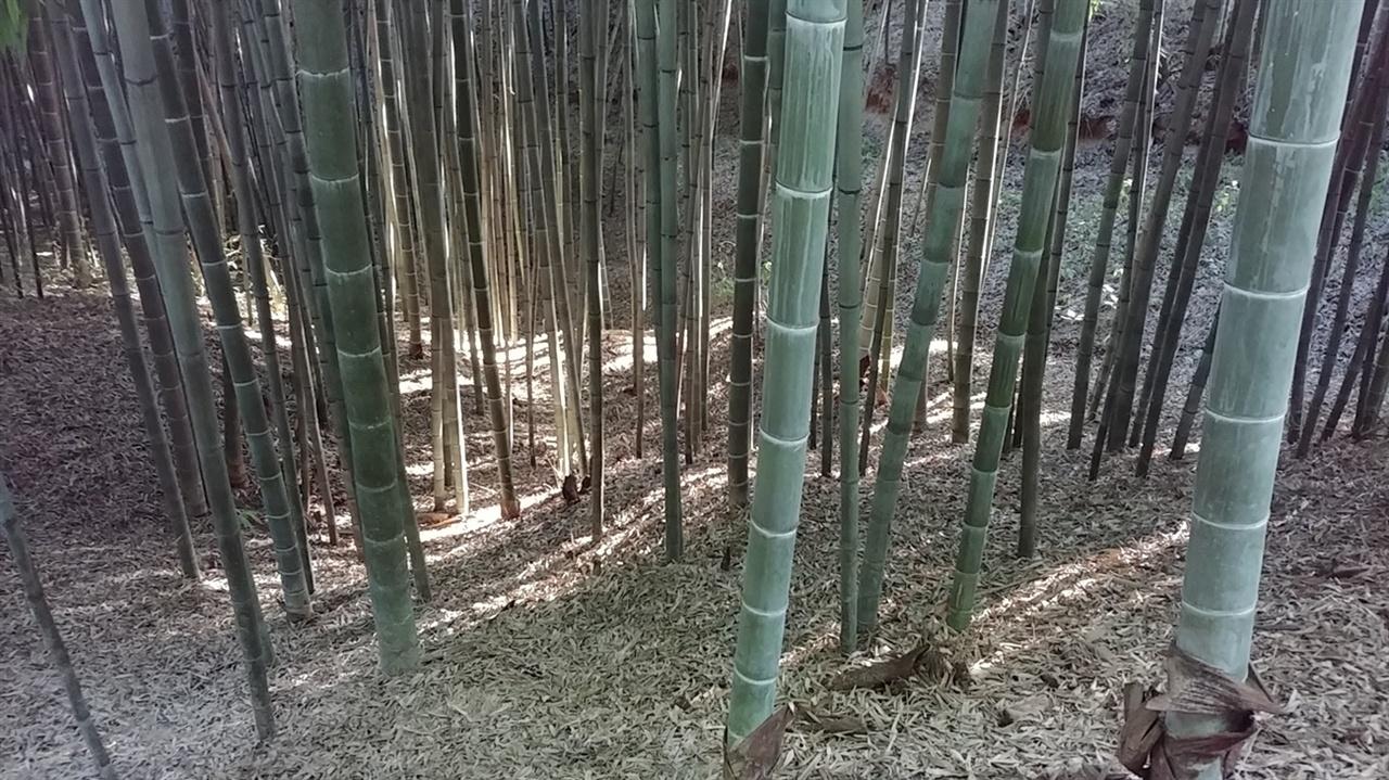 죽녹원 대숲사이로 쏟아지는 가을햇살이 참 아름답다.