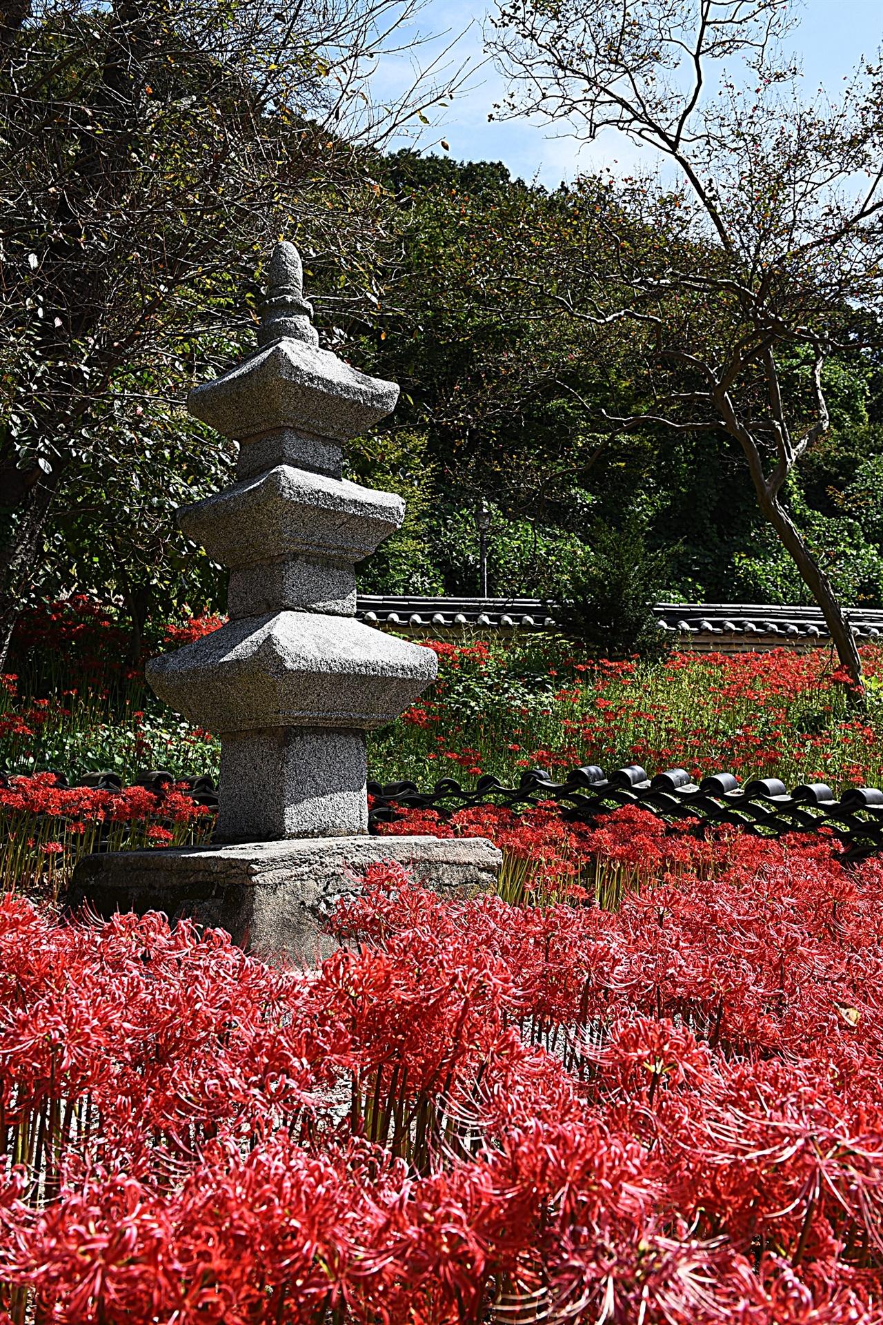 용천사 꽃무릇  용천사는 그리 널리 알려지지 않은 사찰이지만, 9월 하순이면 수많은 사람들이 꽃무릇을 보기 위해 찾는다. 이때는 용천사 내부 곳곳에 숨은 꽃무릇들이 아름답다.