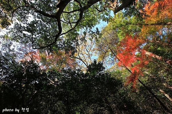 다산초당의 가을 무엇보다 다산초당을 조성할 당시의 화초나 채원 등의 여러 가지 정원 요소와 특징을 되살리는 것이 중요하다.