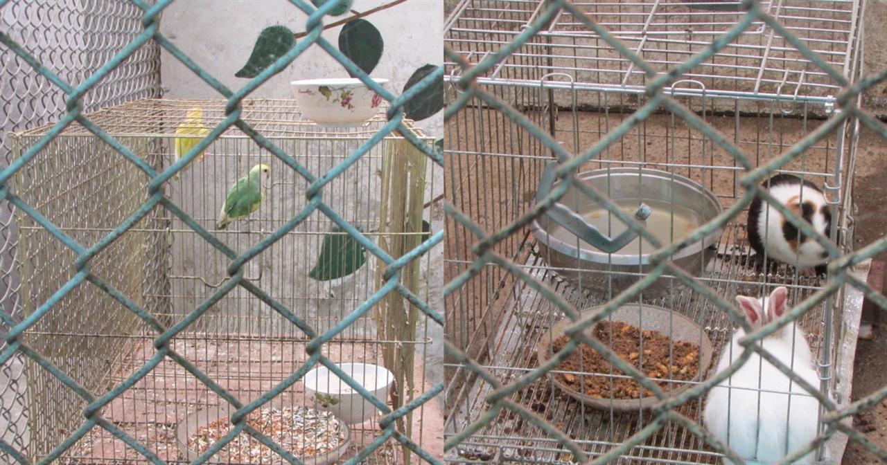 사랑앵무와 토끼, 기니피그가 살고 있는 철장 수목시설 대신 콘크리트 벽면에 풀잎이 그려져 있다.