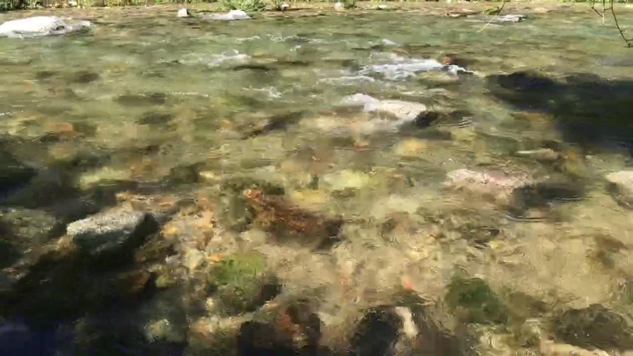 영풍제련소에서 3킬로미터 상류 육송정 삼거리에서 만나게 되는 송정리천의 모습. 맑은 옥계와 같은 강물이 흐른다. 이렇게 맑은 강물이 흘러가는 3킬로미터 아래에 낙동강 최악의 공행공장 영풍제련소가 자리잡고 있다.
